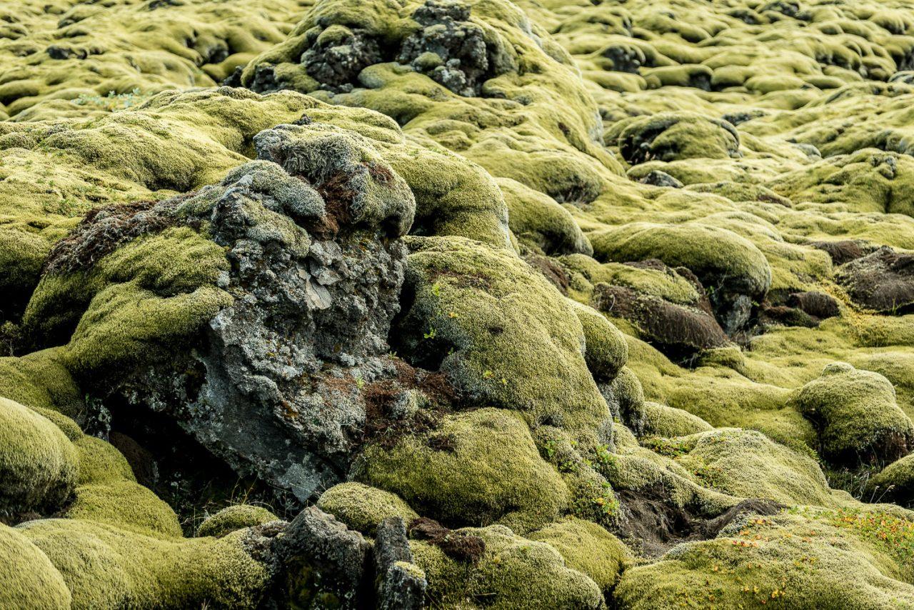 Fotoreise Island Moos